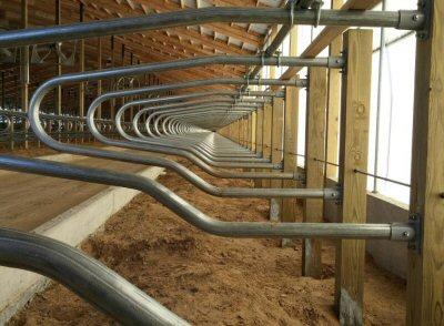 Freestalls Seneca Dairy Systems